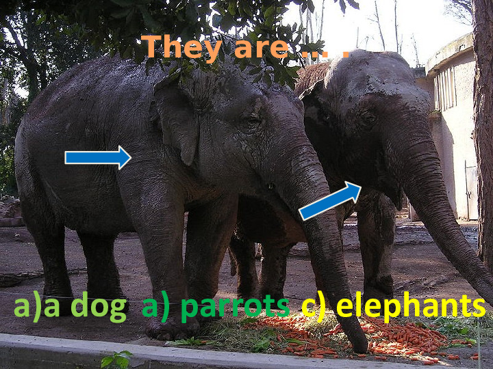 They are … .  a)a dog a) parrots c) elephants