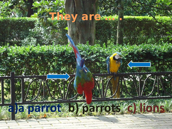 They are … .  a)a parrot b) parrots c) lions